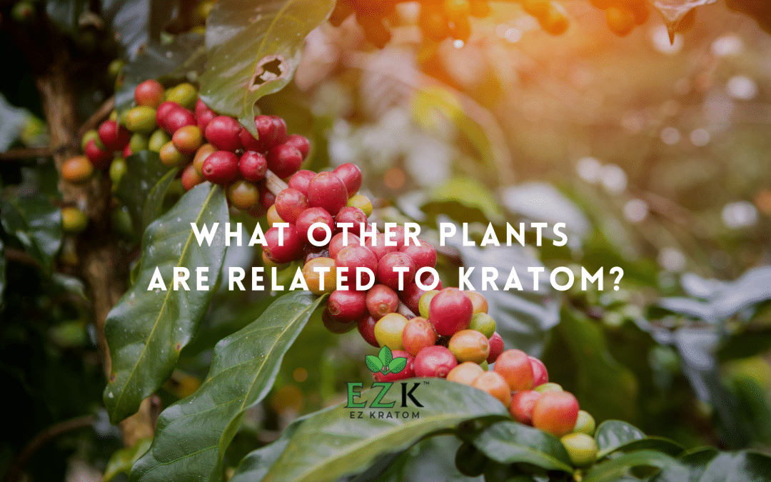 What Other Plants are Related to Kratom?