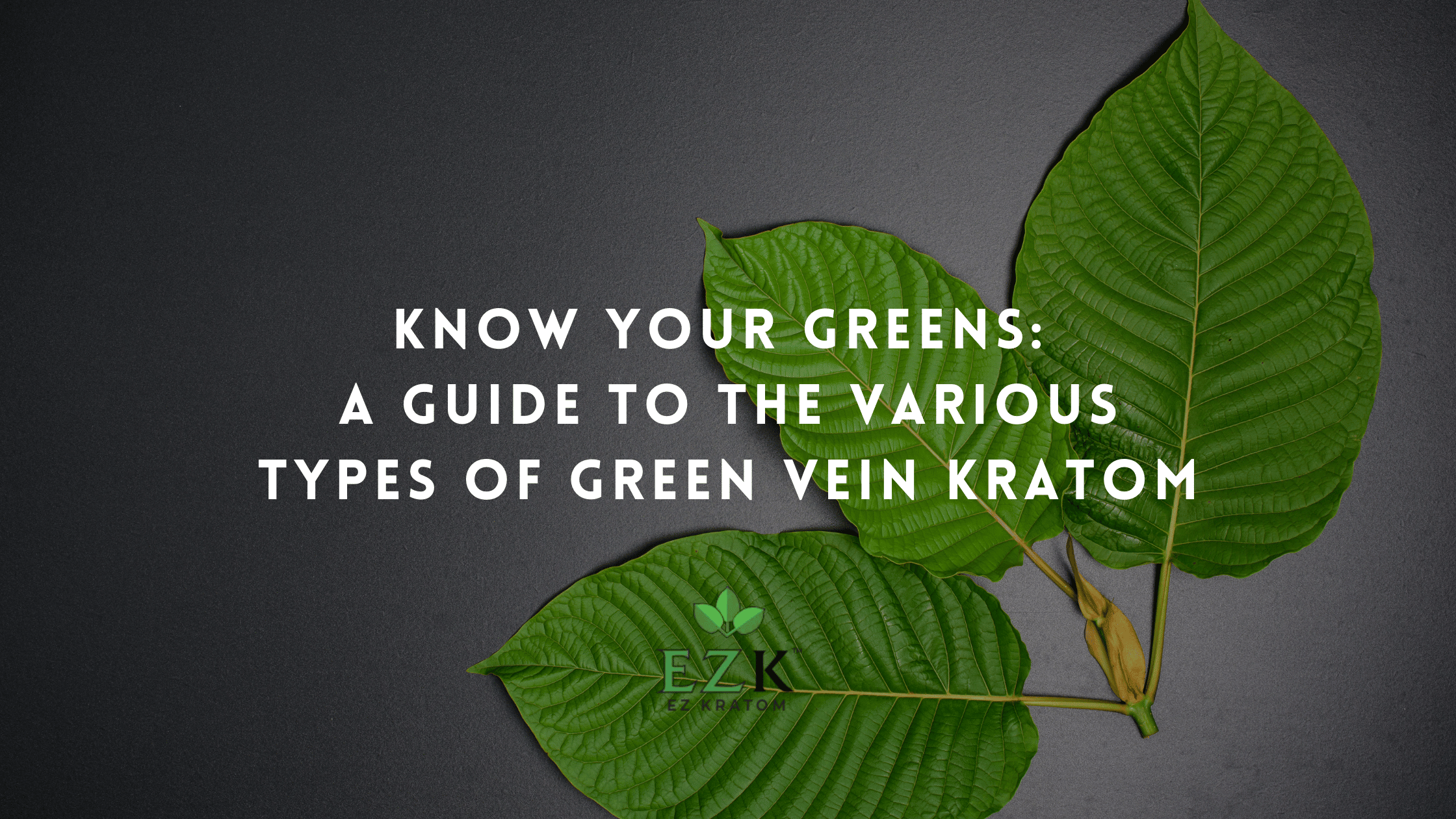 Know Your Greens: A Guide to the Various Types of Green Kratom Strains   EZ Kratom Wholesale