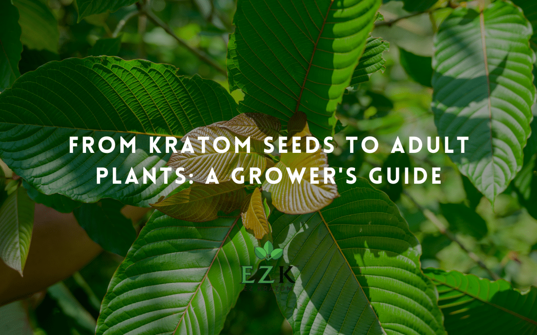 From Kratom Seeds to Adult Plants: A Grower's Guide