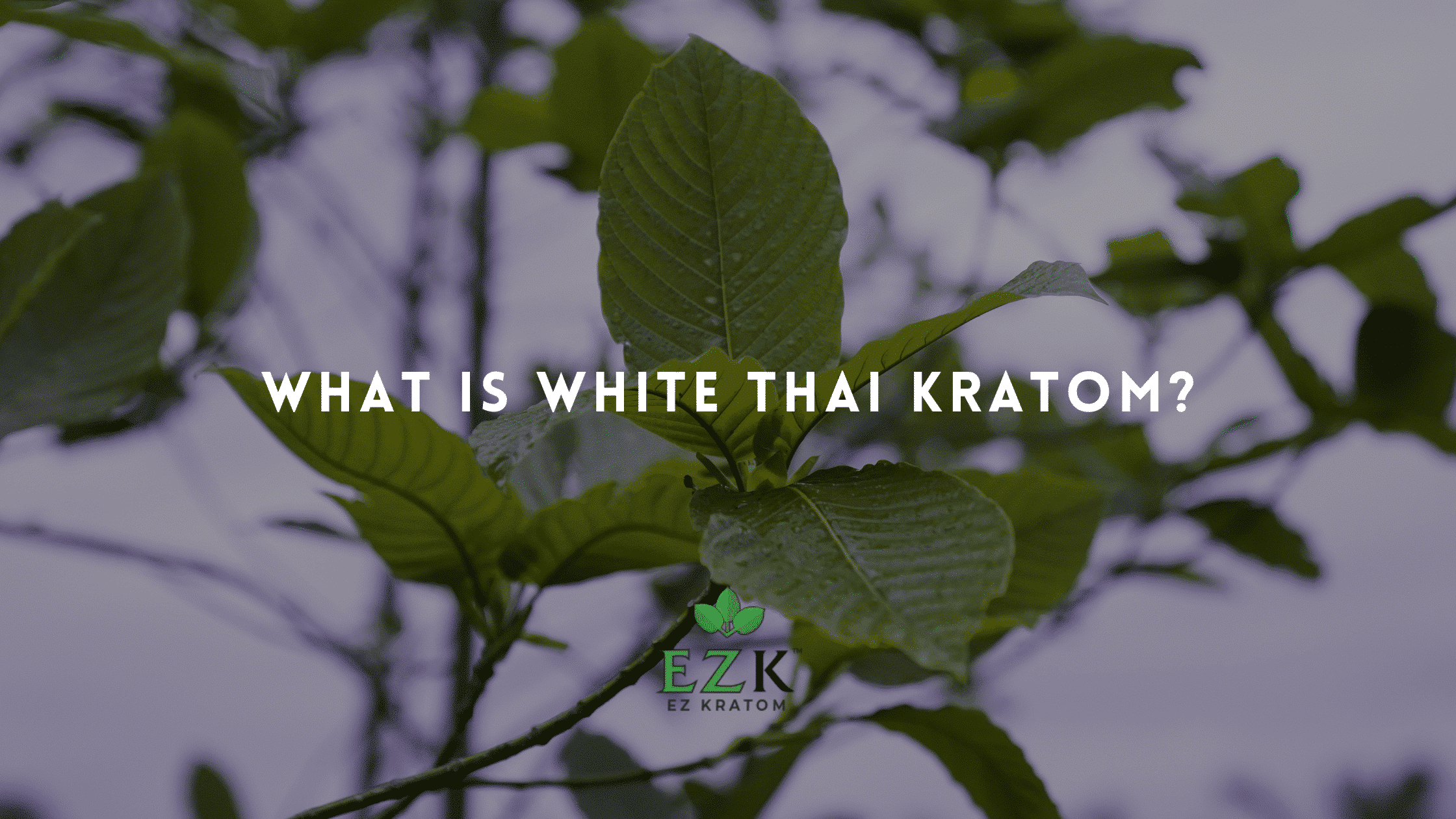 What Is White Thai Kratom_