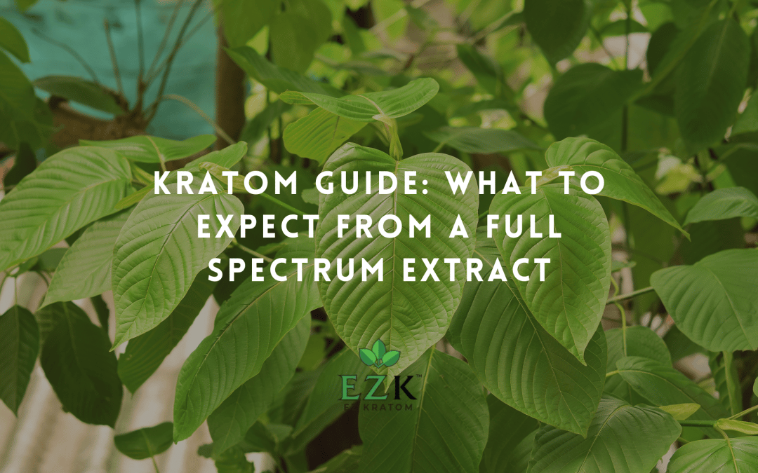 Kratom Guide: What to Expect From a Full Spectrum Extract