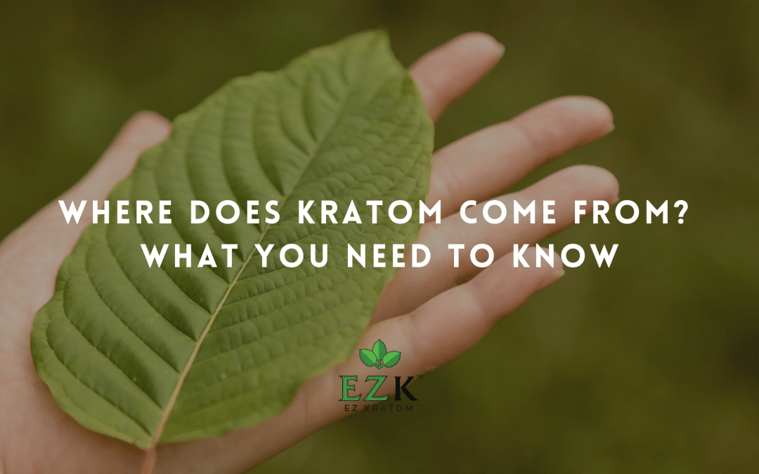 Where Does Kratom Come From? What You Need to Know
