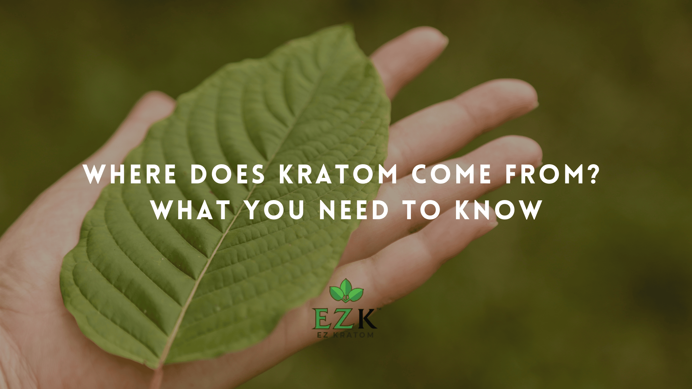 Where does Kratom come from? EZ Kratom Wholesale